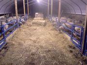 Работа в Германию в сферу сельскохозяйственной промышленности.