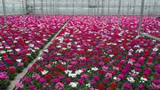 Работа за рубежом - Работа в Польше-мужчины, женщины на упаковку цветов